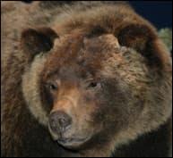 Bear No. 104
