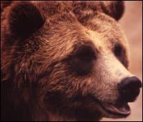 bearbynumbers-6