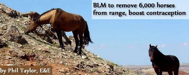 BLM to remove 6,000 horses from range, boost contraception