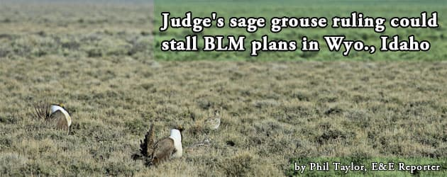 Judge's sage grouse ruling could stall BLM plans in Wyo., Idaho