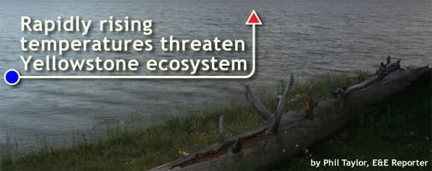 Rapidly rising temperatures threaten Yellowstone ecosystem