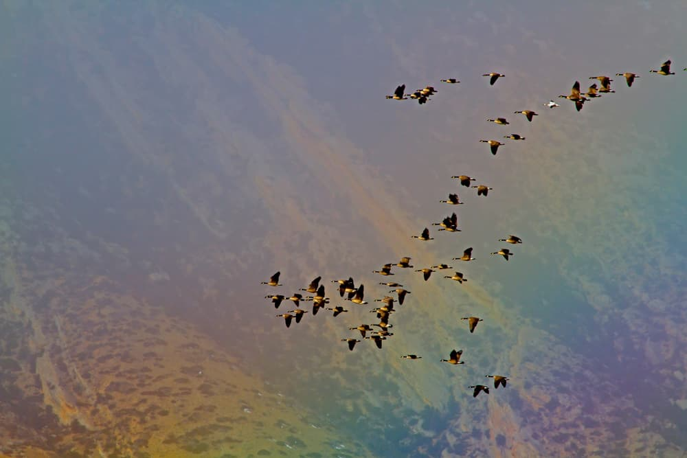 Flying With The Flock - Kathy Lichtendahl