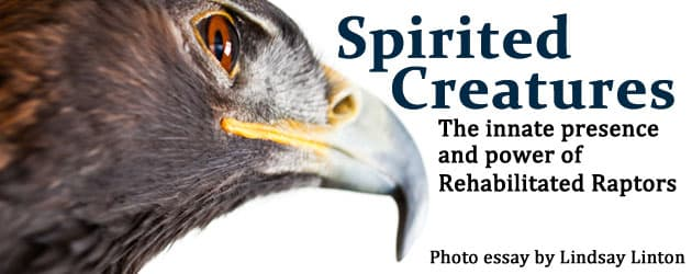 Spirited Creatures:  The innate presence and power of Rehabilitated Raptors