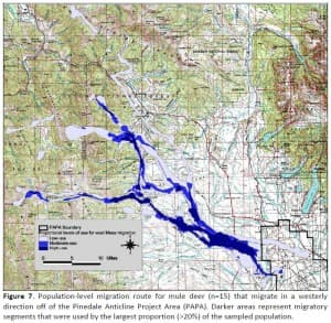 Western migration of mule deer off the Pinedale Anticline project