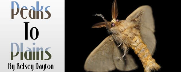 Small insects, big lessons