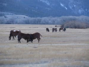 Two horses started to fight at the ranch of Jana and Rich Wilson