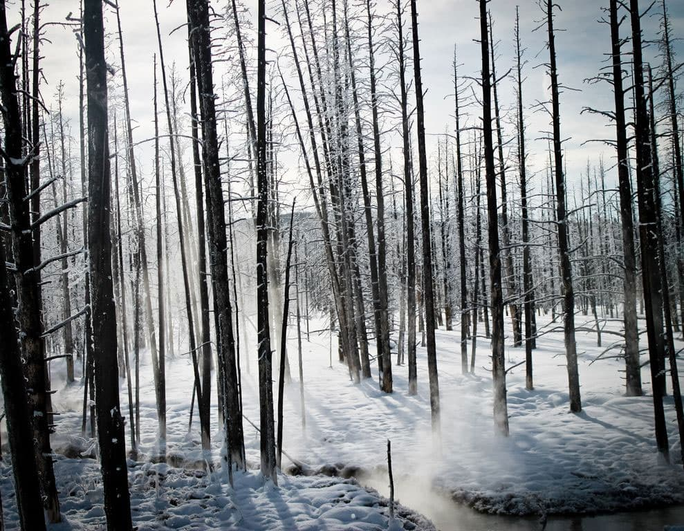 There is a subtle beauty in Yellowstone in the winter with muted colors and steam rising for water