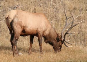 Wyoming lawmakers cut back on wildlife fire budgets for Wyoming game and fish license