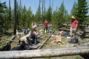 Researchers collect data on forest regrowth  in Yellowstone National Park. (Photo courtesy Daniel Tinker)