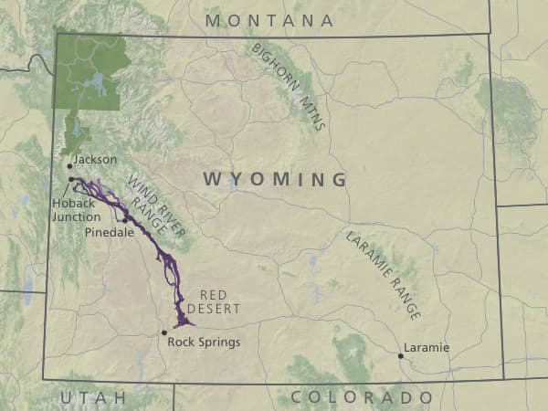 Americas Longest Mule Deer Migration Discovered In