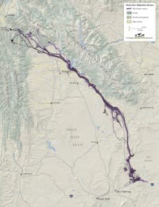 The migration route of mule deer from the Red Desert to the Hoback Basin. (Migration Initiative — click to enlarge)