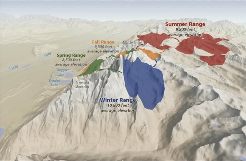 Radio collar data collected by Courtemanch and overlaid on a Google Earth image shows that bighorn sheep use habitat in different elevations during each season. (Courtesy Alyson Courtemanch — click to enlarge)