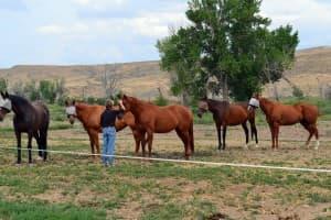 Rainhorse therapy horses (Garcia - click to enlarge)