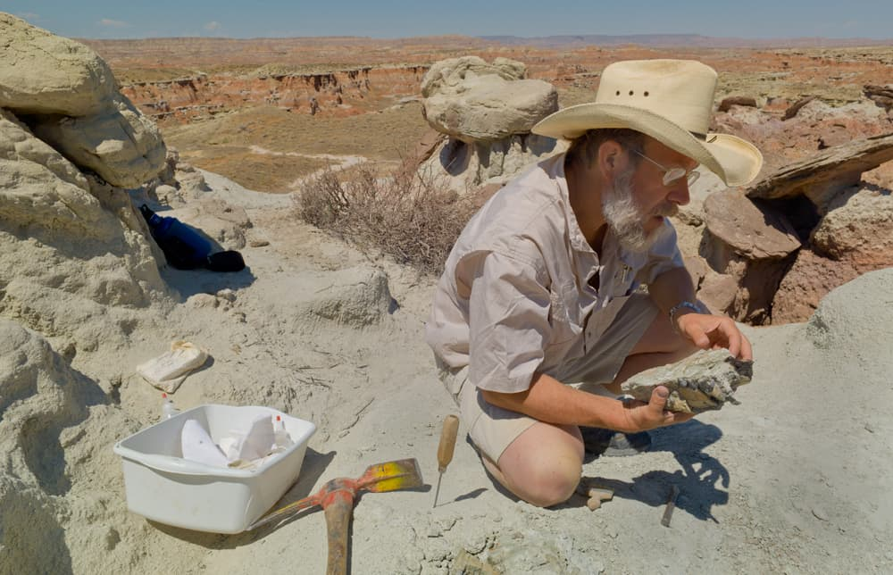 Paleontologist Ken Rose examines the fossilized jaw and some teeth of a Coryphadon, an extinct, galumphing, cow-sized herbivore from the Eocene. Four decades of work in the Bighorn Basin gives the fossil-hunting professor insight about what happens on earth when the climate changes. (Angus M. Thuermer Jr./WyoFile — click to enlarge)
