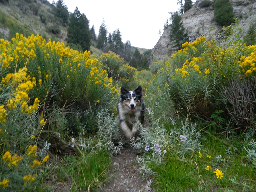 It was a gray, rainy day, which made the vibrant colors of thistles, rabbitbrush, and lichens startling in contrast. (click to enlarge)