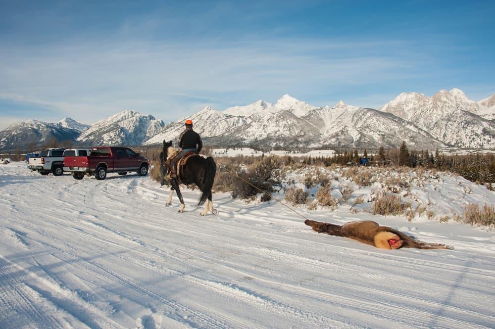 Photographers sue to stop Grand Teton elk hunt