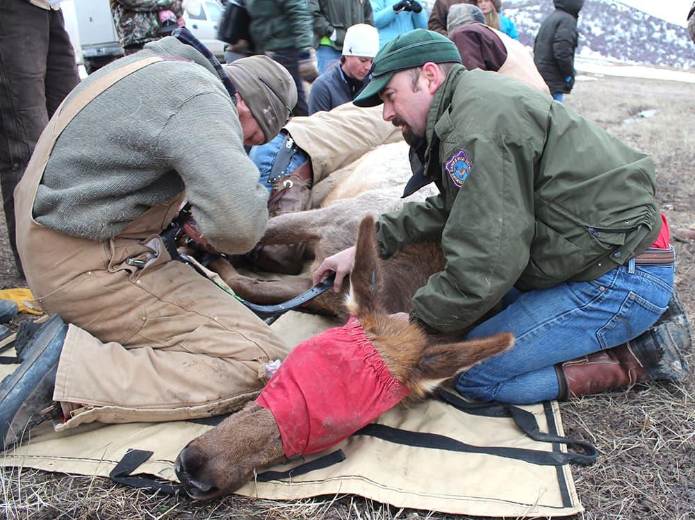 Beetle killed trees impede elk and elk hunters