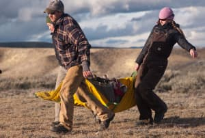 Matt Hayes, Melia Devivo and Teal Wyckoff haul a deer from the landing site for processing. After a helicopter team drops the does off, researchers spend about 10 minutes collecting data from each animal. (Angus M. Thuermer Jr/WyoFile Ñ click to enlarge)