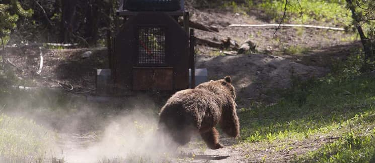 Conservation groups threaten feds with suit over grizzly killings