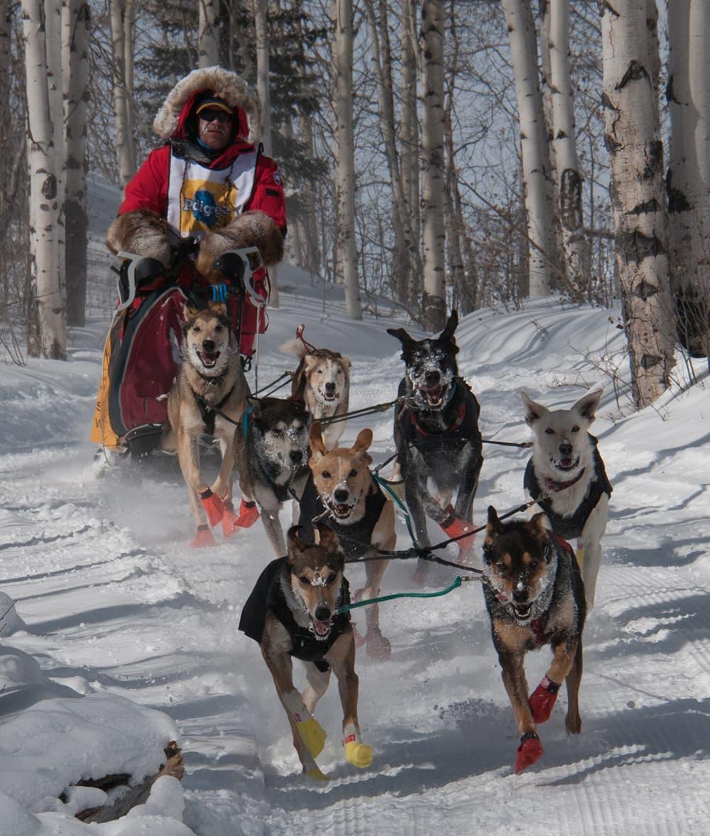 Lander's Lannie Hamilton is 'The Dog Doctor'