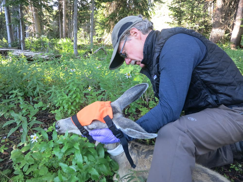 In Grand Teton, retiring biologist sees wildlife restored
