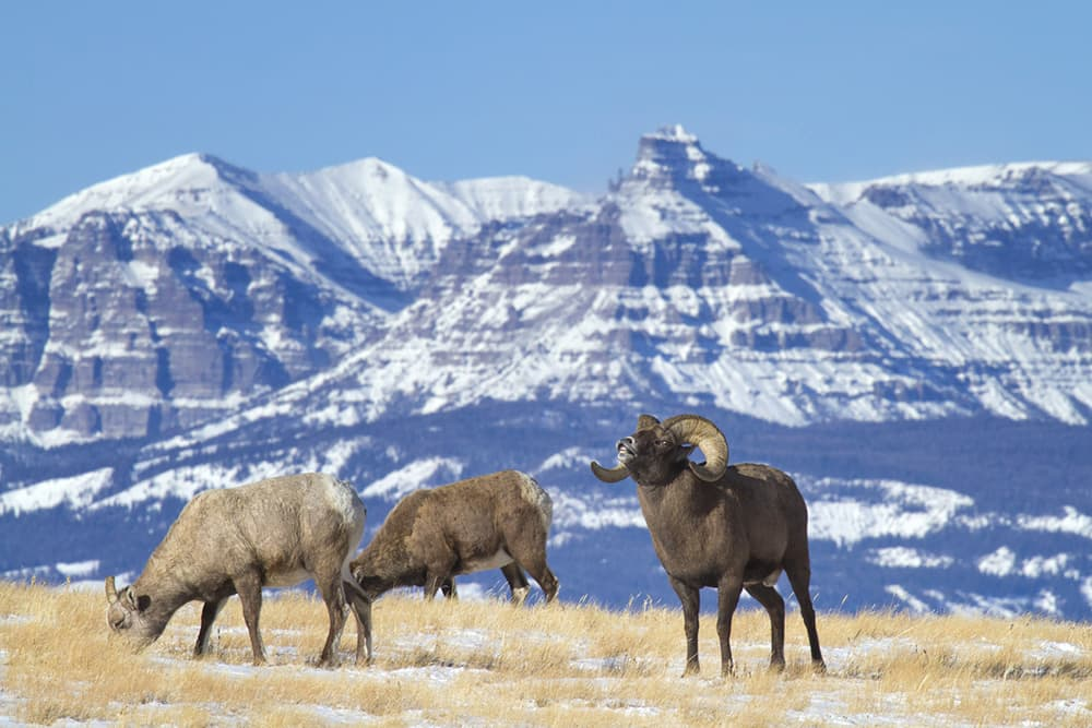 Spring photography season open in Wyoming