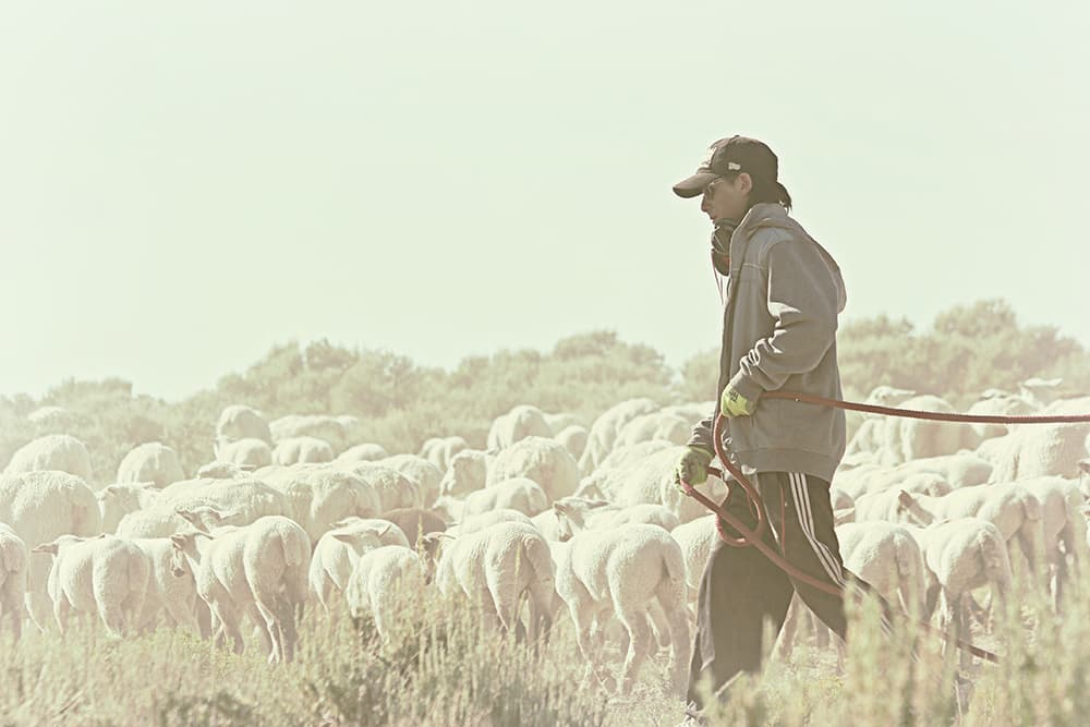 Sheep ranchers worry new labor rules could hurt herding