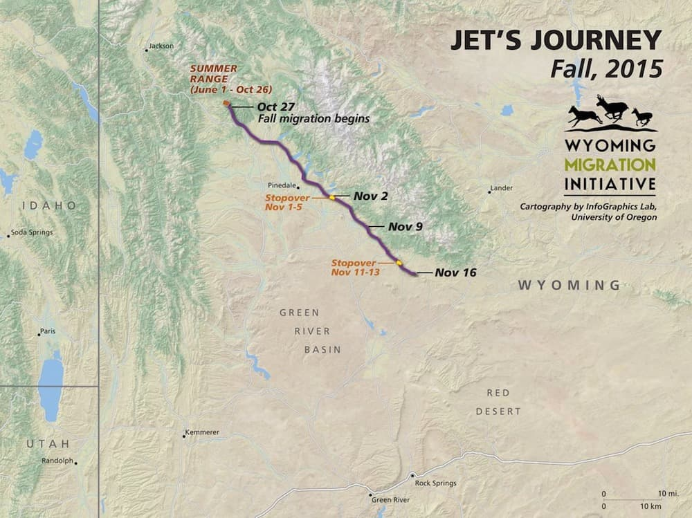 "A map of the migration route taken by ""Jet"" the mule deer doe shows she traversed the entire Wind River Range in November. Data from her GPS collar —and those on many other deer — may inform conservation policy decisions. (Wyoming Migration Initiative)"