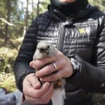 Study: Clark's nutcracker survival may rely on whitebark pine