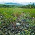 Easement, coal moratorium tangle Teton preservation
