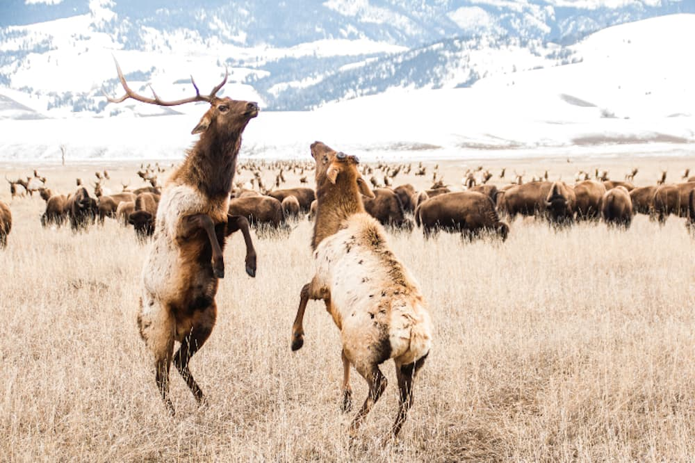 State vet: Combat CWD by reducing elk feeding