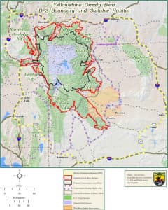Grizzly management after federal protection ends will vary according to where bears live. Federal officials are preparing to define a new conservation strategy and other rules to guide management once Yellowstone-area bears are no longer protected by the Endangered Species Act. When those rules are finalized, states would be free to allow grizzly hunting within some limits. (U.S. Fish and Wildlife Service)