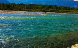 The Snake River looks green from a suspected algae bloom in this photograph supplied by a river ranger with the Bridger-Teton National Forest. The bloom comes at a time when Wyoming Game and Fish has warned anglers not to catch and release fish during warm parts of the day. (Dave Cernicek photo)