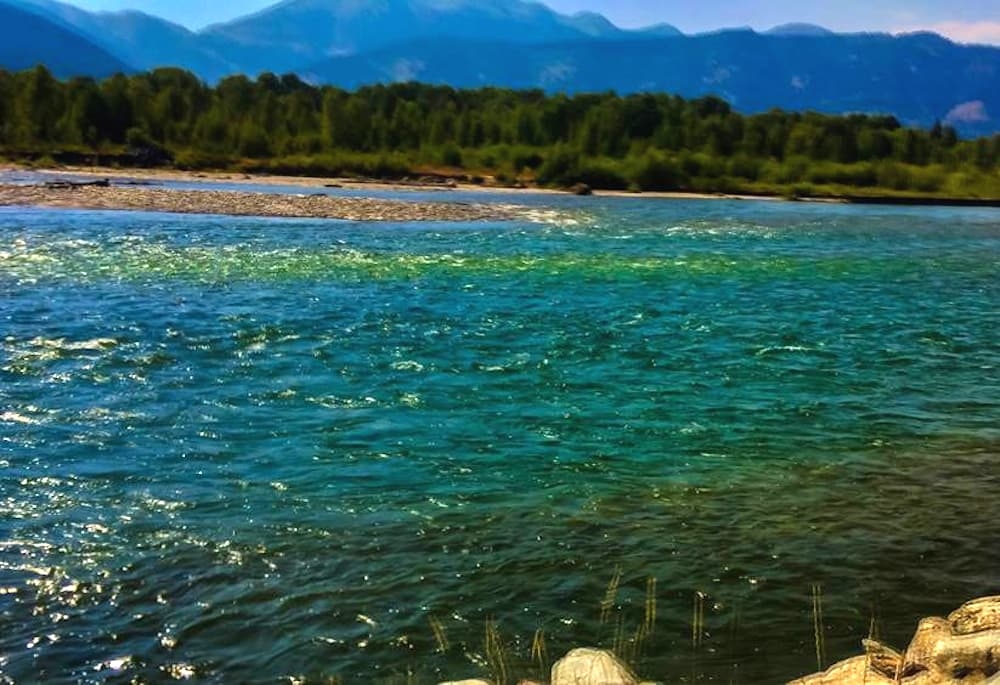 Snake River turns green