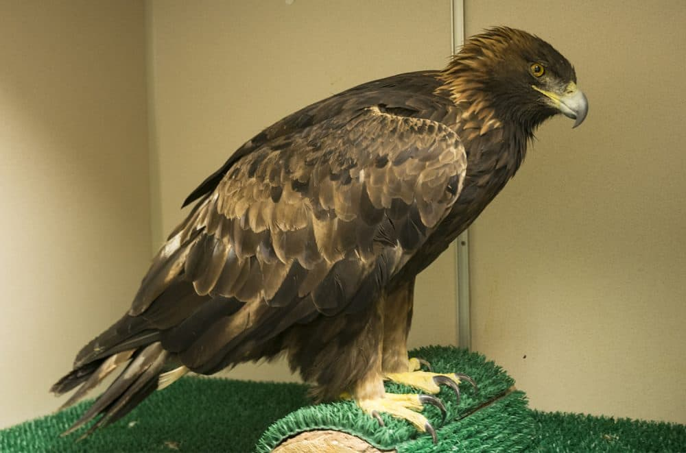 Raptor rescue network arises statewide