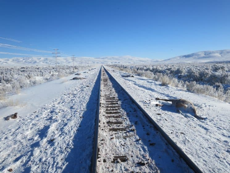 Deep snow drives animals to roads and rail tracks where travel is easier and forage sometimes better. But the location exposes them to collisions. Elk carcasses seen here lie along railroad tracks near Sage Junction in southern Lincoln County. The animals were hit and killed this winter. (Neil Hymas/Wyoming Game and Fish Department)