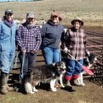 Stockmen, bighorns butt heads in Western showdown