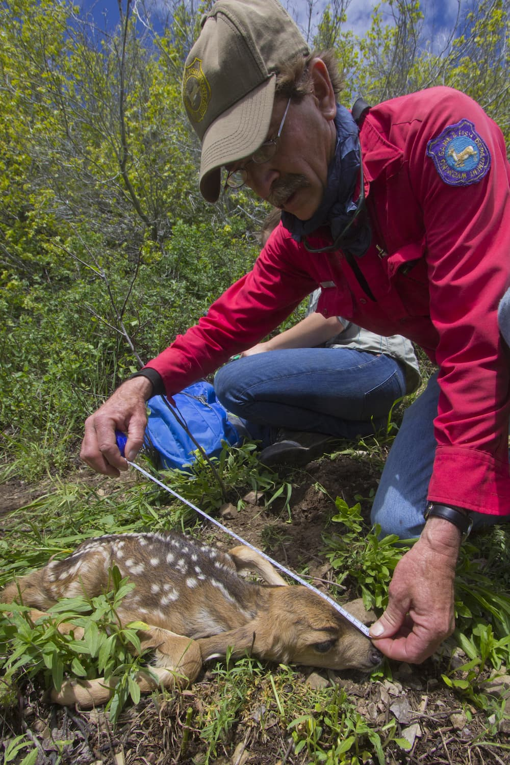 Devastated deer herd offers rare research opportunity for Wyo game fish
