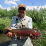 Return of the Yellowstone cutthroat trout