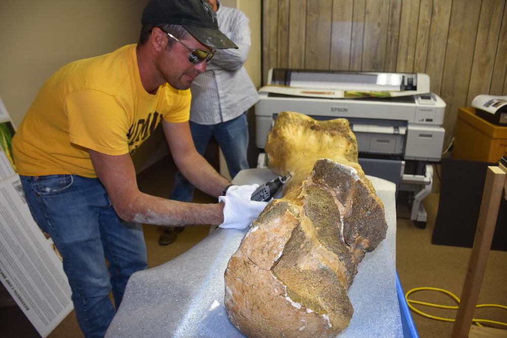 Mammoth-sized mystery