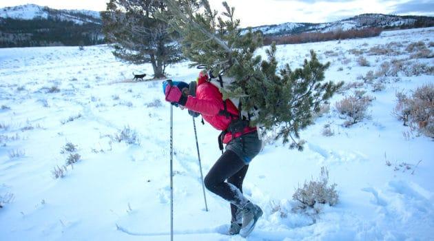 Snow tannenbaum