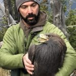 Bird group puts lead ammunition in the crosshairs