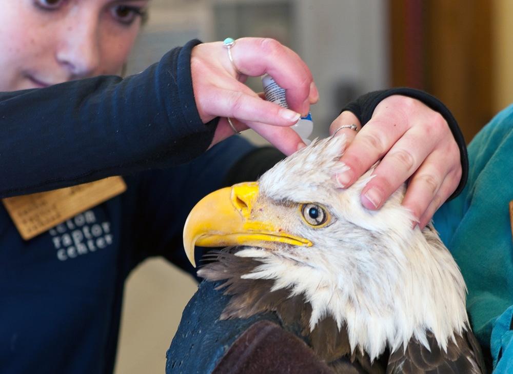 Eagle eye drops