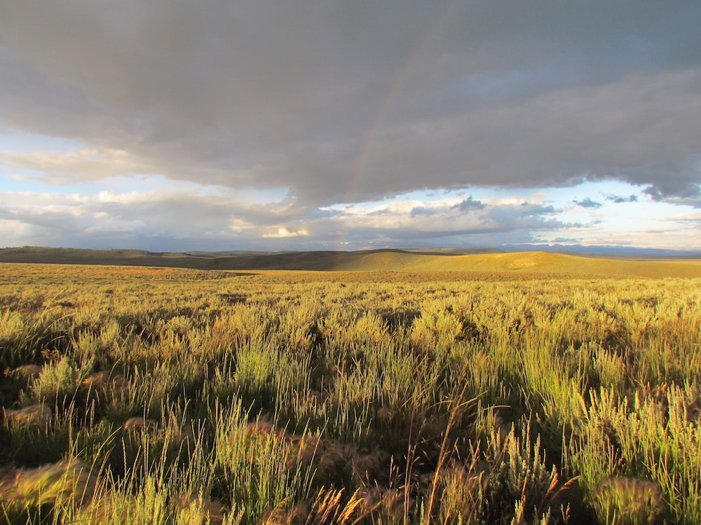 Upper Green allotment should be national park, not feedlot