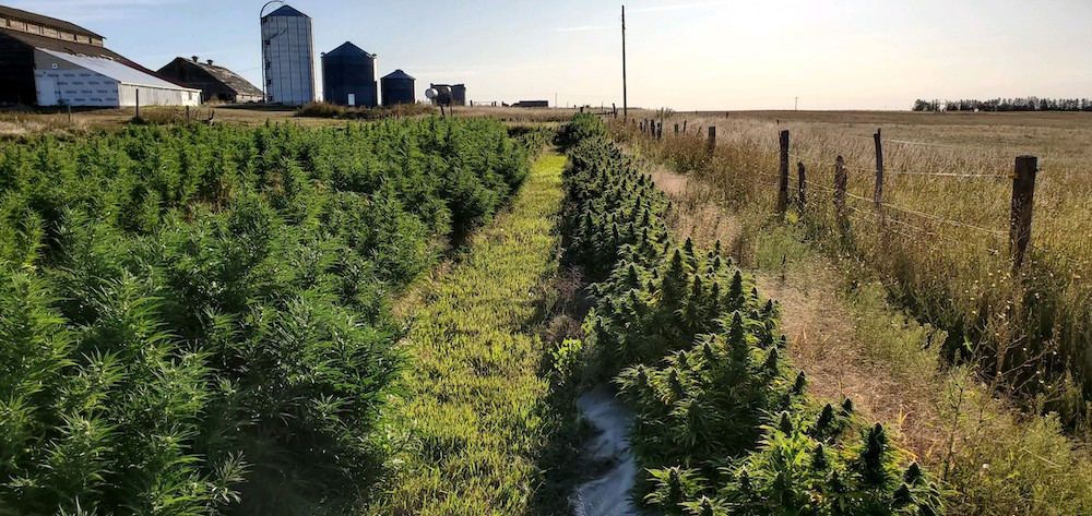 Judge tosses marijuana charges brought against hemp farmers
