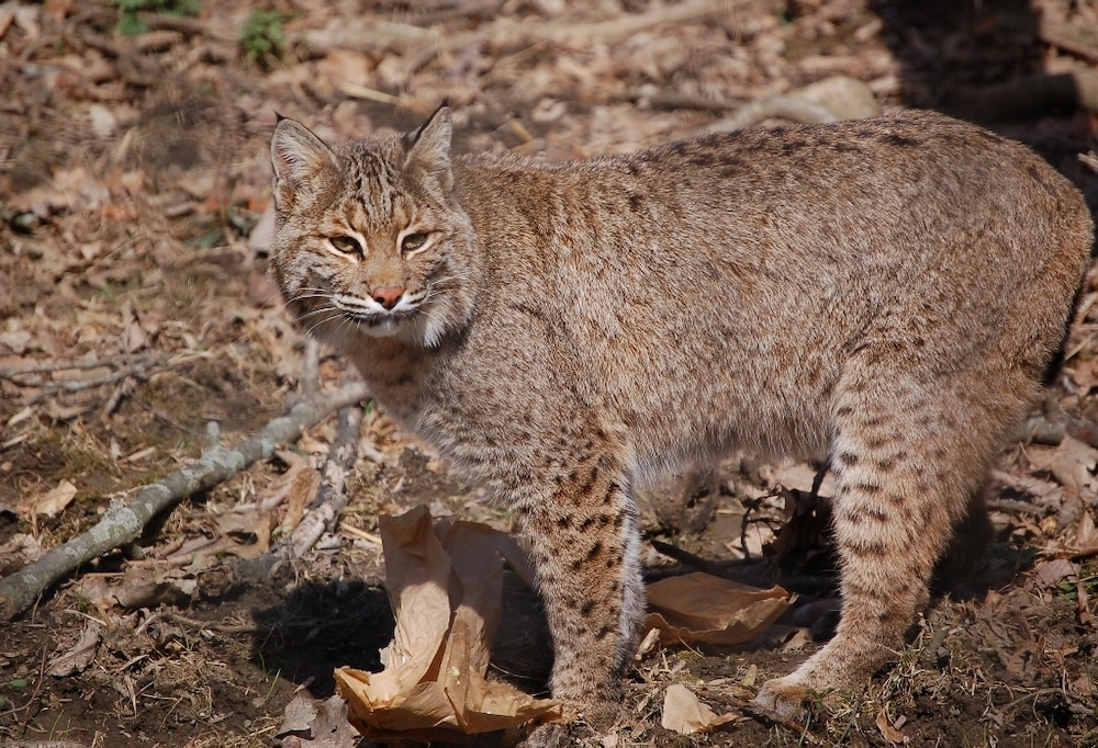 It's time for Wyoming to reform trapping regulations