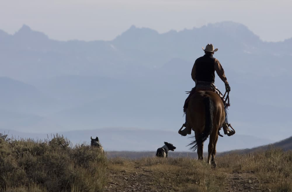 The rancher and the feds: A lesson of shared local knowledge