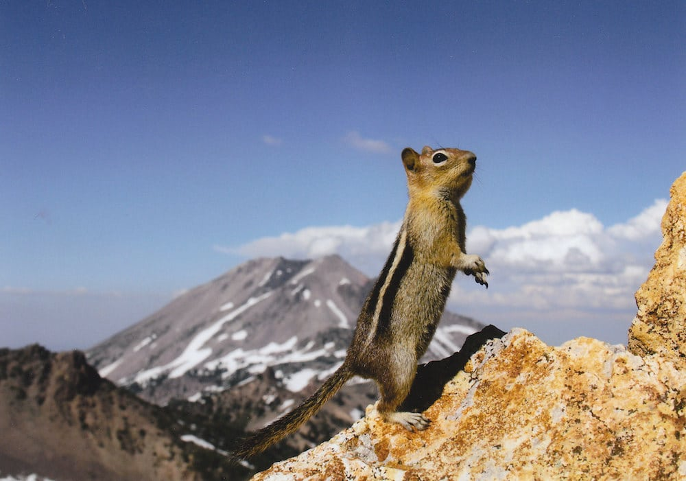 Climate study predicts life-altering changes for Greater Yellowstone